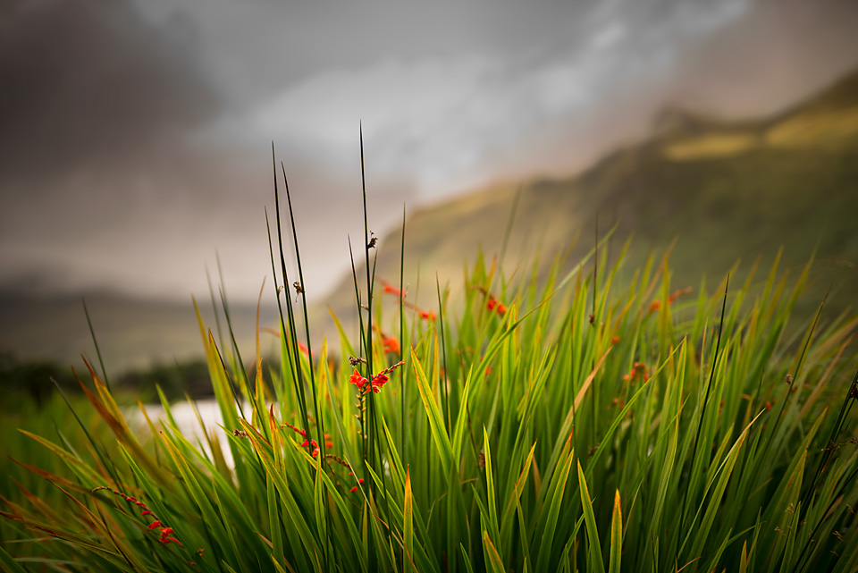 Reeds at Bundorragha river by John Mee photography